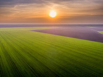 Aerial view of vast green wheat field at sunset - NOF00123