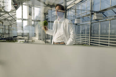 Scientist holding lettuce behind windowpane in a greenhouse - JOSEF01621