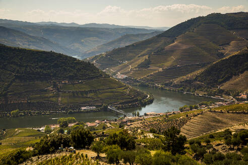 Scenic view of terraced hills surrounding river Douro - NGF00643