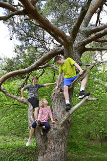 Brothers and sister sitting on branch of tree in forest - ECPF01020