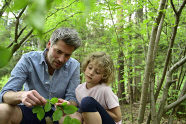 Father showing leaf to daughter while sitting in forest - ECPF01035