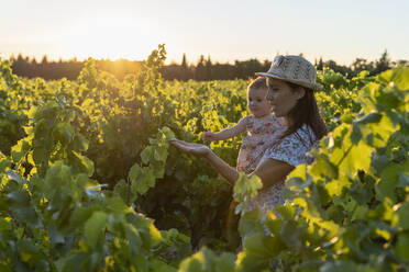 Mother holding her daughter in a vineyard at sunset in Provence, France - GEMF04118