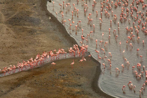 Aerial view of pink flamingos standing near shore and drinking water from lake - ADSF14784