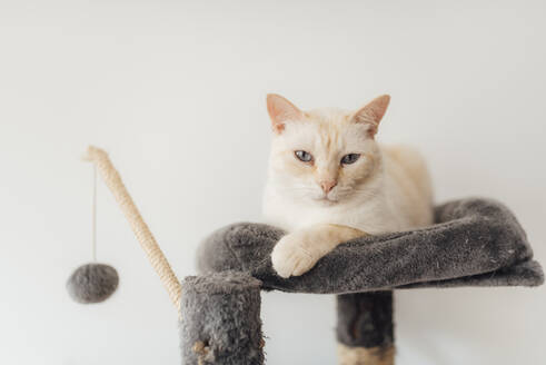 Cat sitting on cushion at home - SASF00062