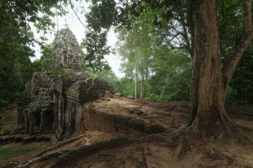Low angle of wonderful scenery of aged Buddhist temple covered with huge tree roots and located in jungles in Cambodia - ADSF15396