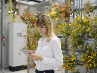 Businesswoman with blond hair using digital tablet while standing against flowers in greenhouse - JOSEF01644