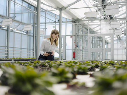 Businesswoman holding digital tablet examining plants in greenhouse - JOSEF01650
