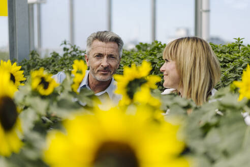 Businesswoman looking at male coworker amidst plants in greenhouse - JOSEF01845