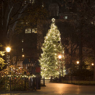 USA, New York, New York City, Christmas tree illuminated at night in Madison Square Park - AHF00085