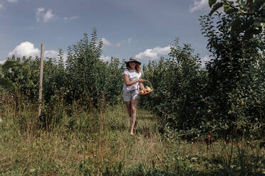 Woman holding basket while walking amidst trees in orchard - OGF00585
