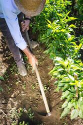 Senior man wearing hat shoveling in community garden - JCMF01505