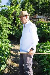 Senior man wearing hat holding shovel while standing in vegetable garden - JCMF01508