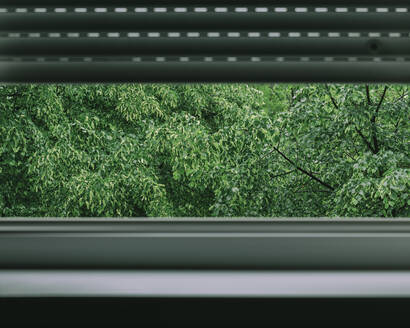 Trees seen through window at home - LCUF00138