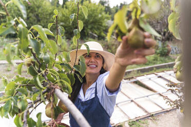 Smiling woman touching fresh pears at vegetable garden - FMOF01206