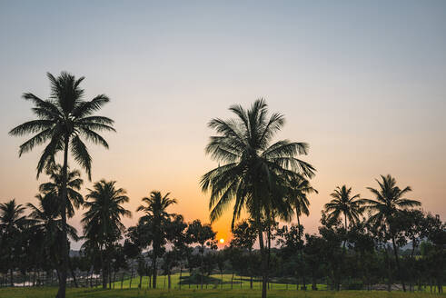 India, Karnataka, Hampi, Palm trees surrounding rice paddy at sunset - JMPF00431