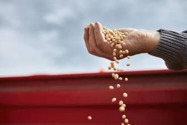 Farmer hand holding soybean against clear sky - ZEDF03978
