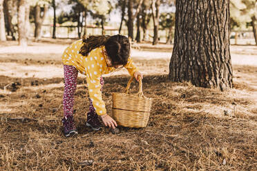Girl bending over while collecting pine cones in wicker basket at park - ERRF04606