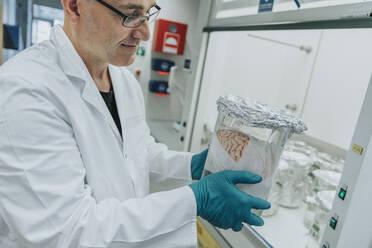 Scientist examining preserved human brain beaker while standing at laboratory - MFF06524