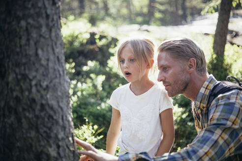 Father and daughter looking at tree trunk in forest - MASF20177