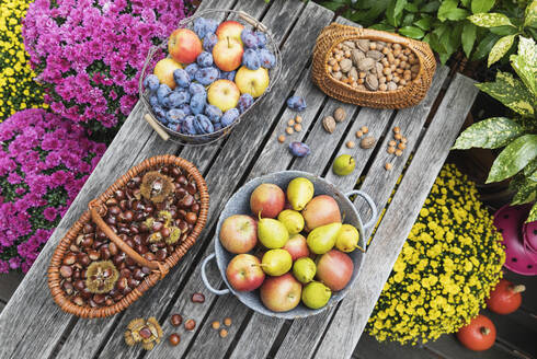 Garden table filled with autumn harvest of nuts and fruits - GWF06770