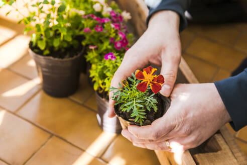 Mid-adult man planting flowers in the balcony - FLMF00303
