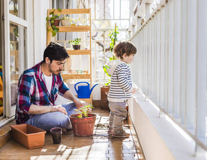 Father and 1 year-old son planting strawberries in a pot in a balcony - FLMF00321