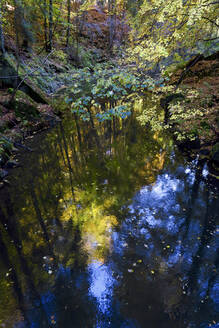 Pond in autumn forest - JTF01721