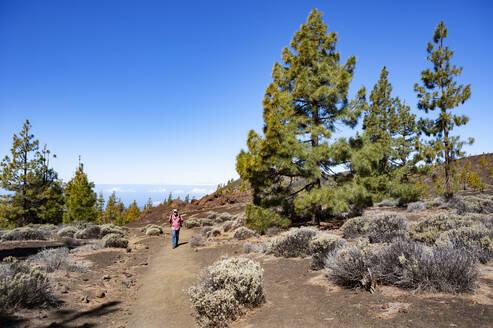 Senior man hiking along trail at Tenerife island - WWF05545