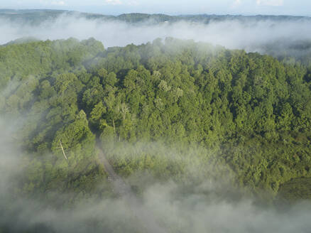 Aerial view of green forest shrouded in low clouds - BCDF00524