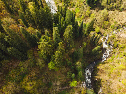 Drone view of clear stream flowing through alpine forest in autumn - JMPF00682