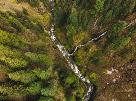 Drone view of clear stream flowing through alpine forest in autumn - JMPF00685