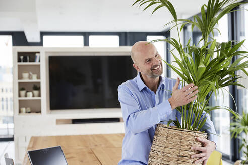 Businessman embracing potted plant while sitting on table at home - FMKF06796