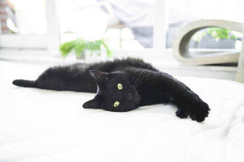 Black cat resting while lying on mattress - CHPF00729