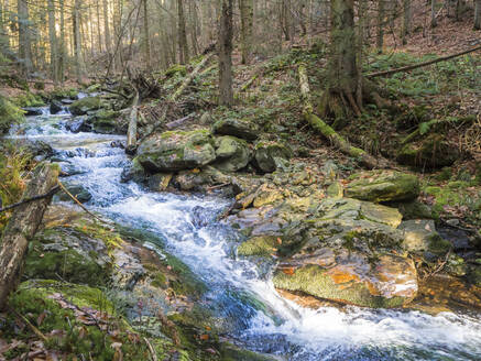 Clear stream flowing in Bavarian Forest - HUSF00141