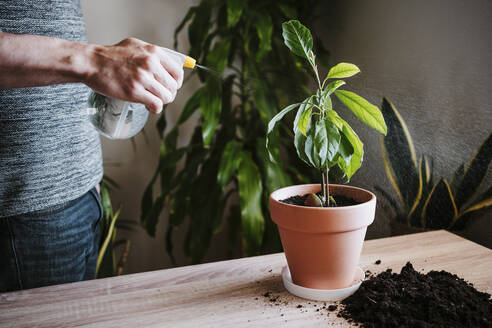 Man watering avocado plant with spray bottle while standing at home - EBBF01826