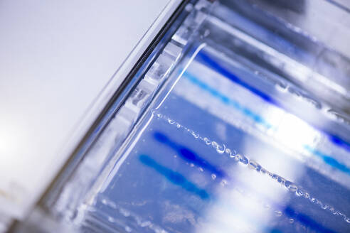 Agarose sequencing gel in glass tray at laboratory - BMOF00485
