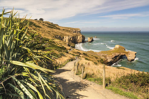 Hiking path to Tunnel Beach, Dunedin, Otago, South Island, New Zealand, Pacific - RHPLF18659