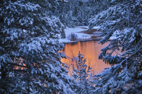Lautersee river seen through snow covered trees in forest during sunset - MRF02415