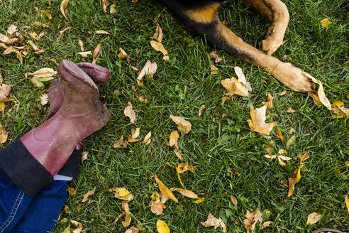 Legs of woman and rottweiler on grassy land in park during autumn - AWAF00026