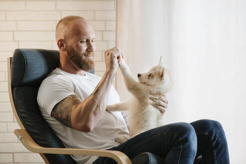Mid adult man playing with Siberian husky puppy while sitting on armchair at home - MIMFF00398