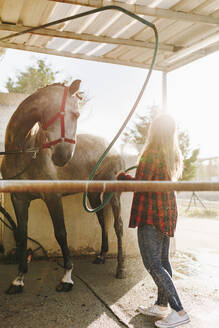Velilla de San Antonio, Madrid, Spain, Young woman washing her horse at the farm - MRRF00834