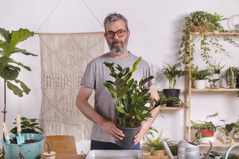 Mature man holding potted plant of Zamioculcas Zamiifolia while standing at home - RTBF01514