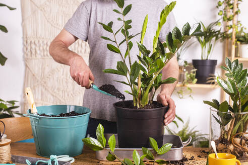 Man putting mud with trowel while repotting Zamioculcas Zamiifolia plant in flower pot at home - RTBF01535