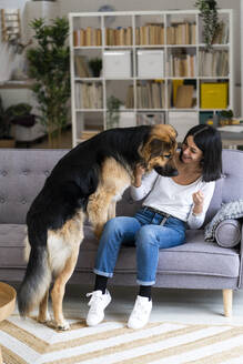 Smiling young woman playing with dog while sitting on sofa in living room - GIOF11303