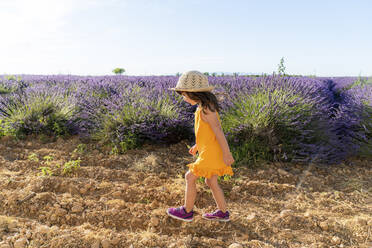 Little girl wearing straw hat walking in lavender field during summer - GEMF04691