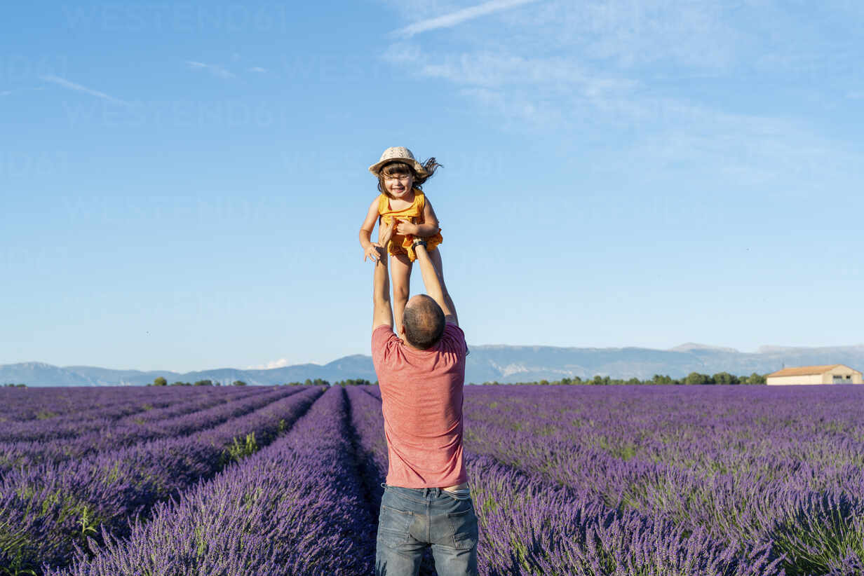 Father holding aloft baby daughter in vast lavender field during summer - GEMF04700 - Gemma Ferrando/Westend61