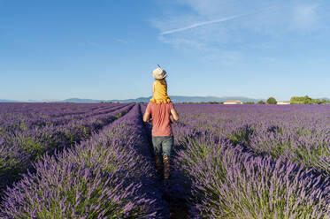 Father piggybacking little daughter in vast summer lavender field - GEMF04703