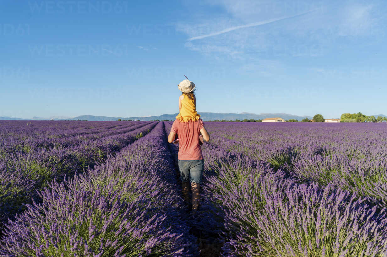 Little girl on shoulders of father in a lavender field at afternoon in Valensole, Provence, France - GEMF04703 - Gemma Ferrando/Westend61