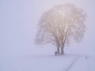 Deutschland, Schwarzwald, Freiamt, Schillinger Berg, Winter , Spaziergang - LAF02684