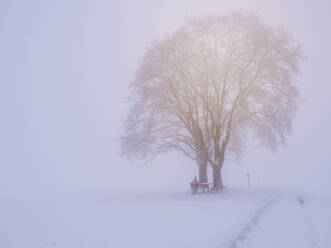 Germany, Black Forest, Freiamt, Person resting on bench under a tree on Schillinger Berg in winter - LAF02684